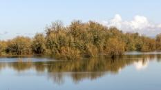 Water was high at Sauvie Island
